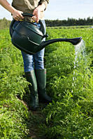 Woman watering crop in field with watering can
