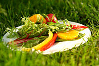 Germany, Munich, Salad on plate in grass