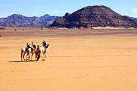 A group of Mehari dromedaries of the Tuareg nomads crossing a vast plain inmidst the Acacous Mountains, Sahara desert, Libya