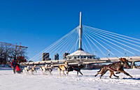 Dog sled racing on the Red River, The Forks, Winnipeg, Manitoba, Canada