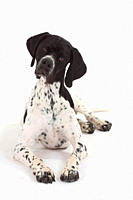English, Pointer