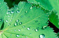 Drops, of, water, on, leaf