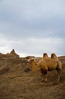 Xinjiang Wuerhe Goast City