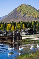 Xinjiang Province,Aletai,