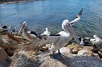 Kingscote, Kangaroo Island, South Australia, Australia