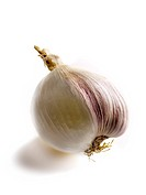 Transgenic white onion-garlic (thumbnail)
