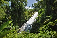 Jamaica, Ocho Rios, Shaw Park, Waterfall in Botanical Gardens