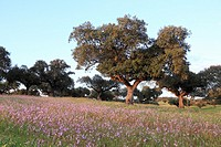Typical meadow landscape, Serra de São Mamede, Alentejo, Portugal