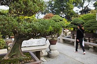Bonsai tree garden in Humble Administrator's Garden UNESCO World Heritage Site, Suzhou, Jiangsu, China