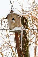 Ice and snow covered birdhouse next to a fence and tall grass in mid-winter