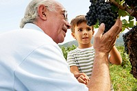 Grandfather and child looking at grapes