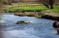 Arlanzon river  Burgos  Castile  Saint James Way  Spain