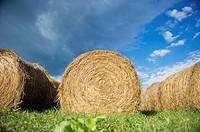 Round hay bales.