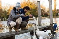 Couple feeding swans