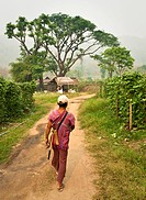 Thailand, Chiang Mai Province, Guide leads the way to the Patara Elephant Farm.