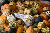 Heap of gourds