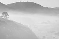 USA, California, foggy coast