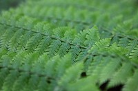 ferns on La Palma. Canary Islands, Spain.