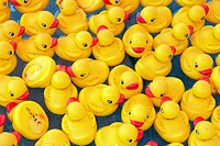 yellow rubber duckys floating on water