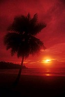 Silhouette of a palm tree on the beach, Port Blair, Andaman and Nicobar Islands, India