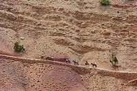 Travellers travelling with mules in the High Atlas Mountains, Ait Bouguemez, High Atlas, Morocco, Africa