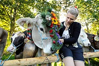 Decorating the lead animals for the return of livestock from high alpine summer pastures, in Pfronten, Ostallgaeu district, Allgaeu, Bavaria, Germany,...