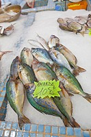 France, Provence, Cannes. Fish for sale in market. Credit: Fred Lord / Jaynes Gallery / DanitaDelimont.com