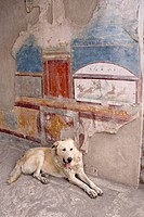 Italy, Campania, Pompeii. A stray dog and fresco. Credit: Wendy Kaveney / Jaynes Gallery / DanitaDelimont.com