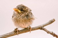 little bird on a branch