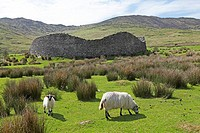 Staigue Fort, Ring of Kerry, Ireland, Europe NON EXCLUSIVE USAGE FOR CALENDAR, 2014, TERRITORY: D, A, CH