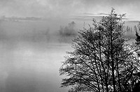 This nature stock image is a foggy morning on a lake at sunrise with the misty rising up off the water Trees in the foreground add further interest to...