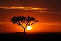 Sunset, Masai Mara, Kenya, Africa
