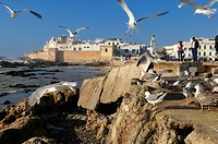 View of Mogador, historic district of Essaouira, Unesco World Heritage Site, Morocco, North Africa