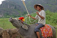 A farmer rides on a water buffalo at Ninh Binh Province Vietnam August 2010