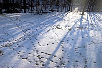 various animal footprints in snow