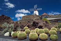 Wind mill in a cactus garden, Golden Barrel Cactus (Echinocactus grusonii), Jardin de Cactus, built by the artist Cesar Manrique, Guatiza, Lanzarote, ...