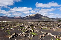 Wine_growing, dryland agriculture on lava, volcanic landscape at La Geria, Lanzarote, Canary Islands, Spain, Europe