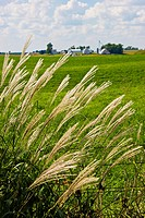Grass with distant view of a farm in rural Iowa