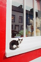 Black and white cat on a window ledge of a brightly painted building