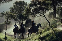 Pilgrims riding through sunlit landscape, Andujar, Jaen province, Andalusia, Spain, Europe
