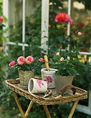 Potted roses and garden tools