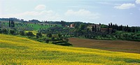 Country house and Rapefield, b. Torrita di Siena, Tuscany, Italy