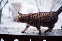 Cat walking along balustrade, Tegernsee, Upper Bavaria, Germany