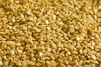 Lentils, Channa Dal, Gram Lentils, Lens culinaris, India