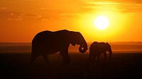 African elephant (Loxodonta africana), elephants at sunset, Masai Mara National Reserve, Kenya, East Africa, Africa