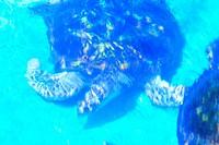 Turtle, Forte Beach, S.J. da Mata, Bahia, Brazil