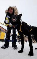 4 time champion Hans Gatt thanking his dog Tank after winning his 4th Yukon Quest 1, 000-mile International Sled Dog Race 2010, finish line, Whitehors...