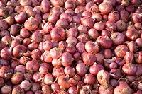 Pile of red skinned onions allium cepa