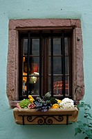 Alsace wine route town Riquewihr France vineyard harvest grapes