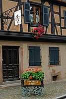 Alsace wine route town Kientzheim France vineyard harvest grapes